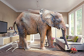 Big elephant and the basket of apples  in the living room. Photo combination. 3d elements