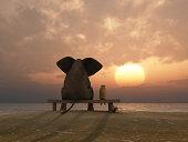 elephant and dog sit at summer sunset