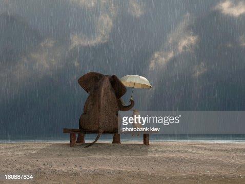 Elefant und Hund Sitzen Sie unter dem Regen : Stock-Foto