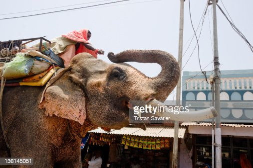 Elephant and his Mahout in street : Stock Photo