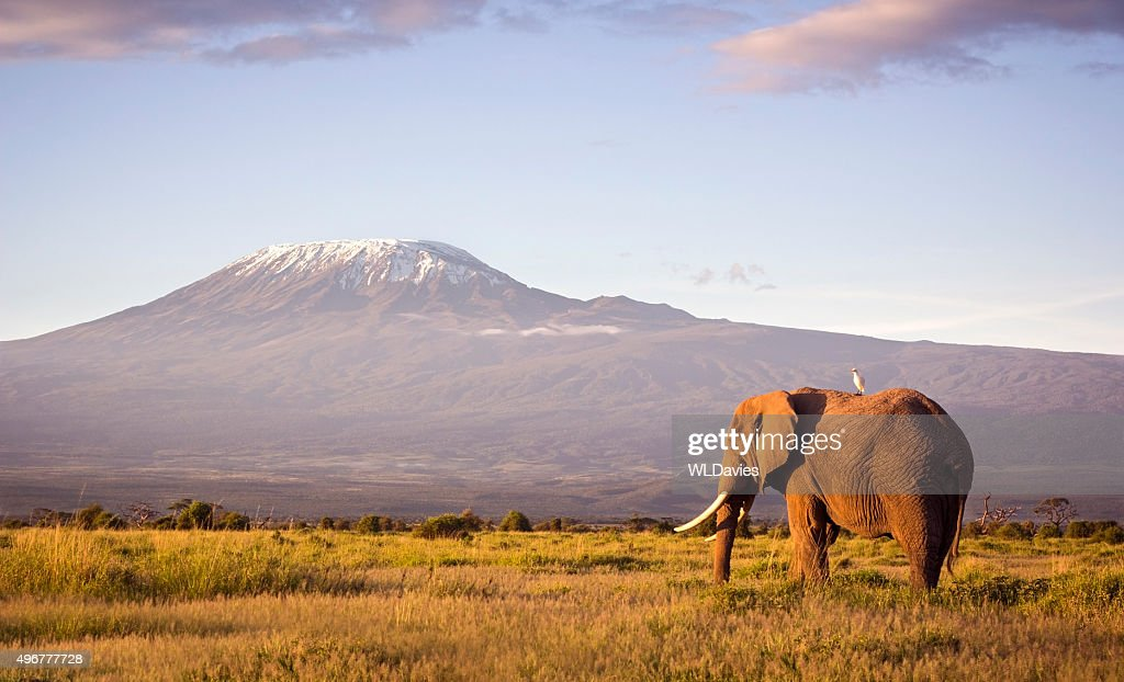 Elephant and Kilimanjaro : Stock Photo