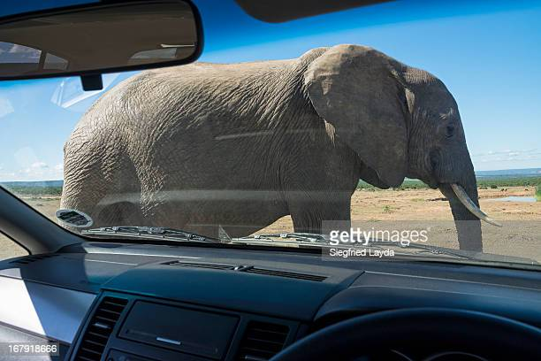 Elephant and Passenger Car