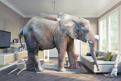 Big elephant and the baby  in the living room.Photo combination concept