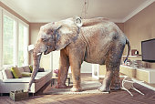 Big elephant and the case of beer  in the living room. Photo and 3d concept combinationn