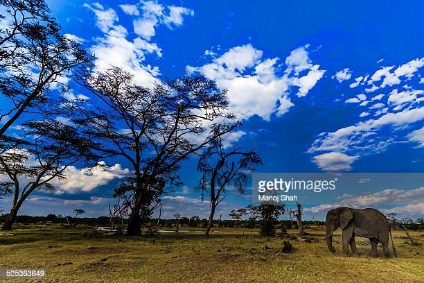 Elephant at the marsh