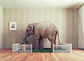An Elephant calf as the pet. Photo combination concept