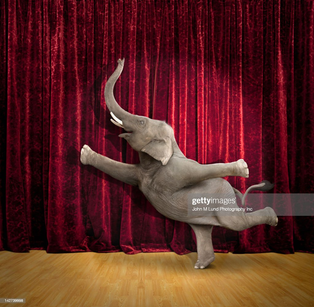 Elephant dancing on stage : Stock Photo