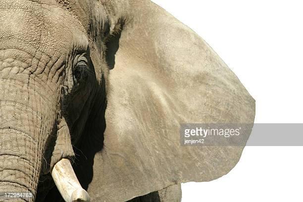 Éléphant du visage