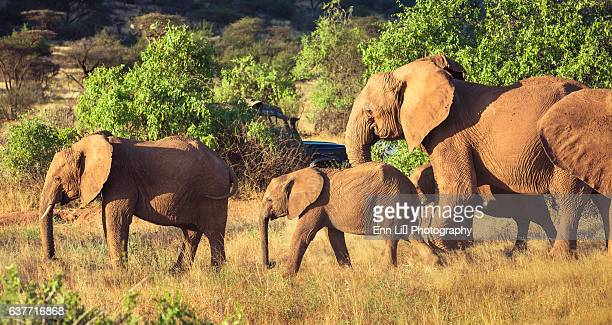 Elephant family and safari vehicle
