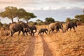 A family of elephants in Tarangire National park, Tanzania.