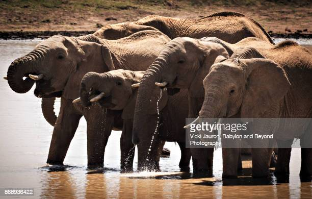 Elephant Family at Water Hole in Laikipia, Kenya
