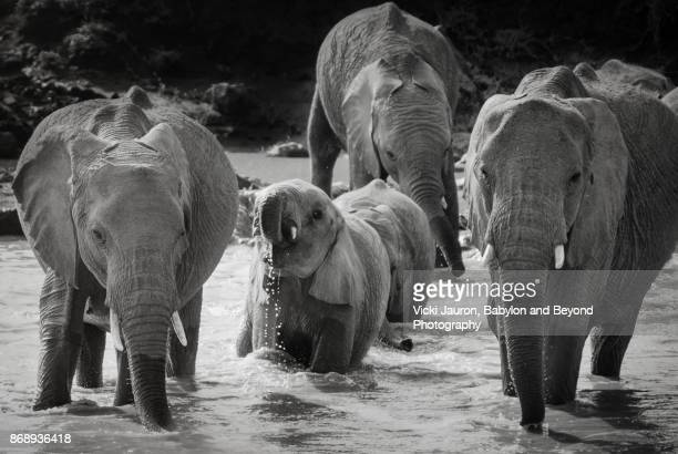 Elephant Family in Watering Hole in Laikipia, Kenya