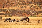 Group of elephants near Palmwag in Namibia, Africa.
