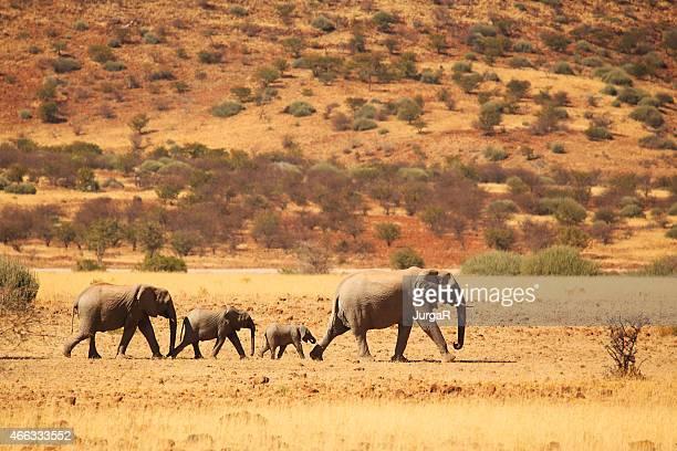 Elephant Family Walking in Namibian Desert