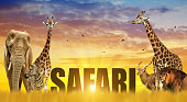 Elephant, giraffes, zebra and lion on the savannah at sunset. African safari wildlife animals.