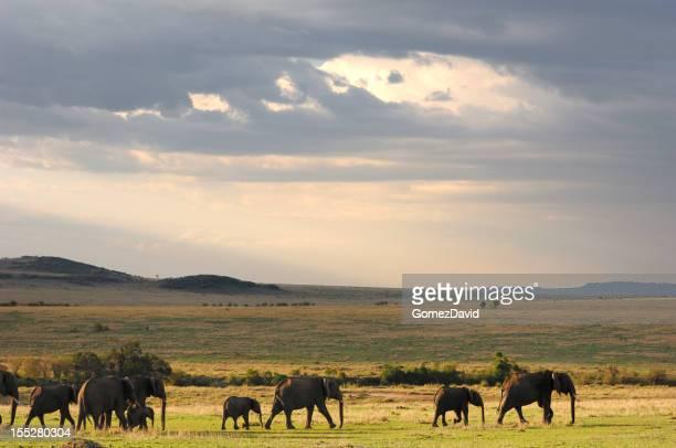 Troupeau d'éléphants marchant dans la plaine d'Afrique