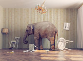elephant calm in a room. photo combination concept