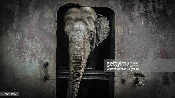 Elephant In Cage At Zoo