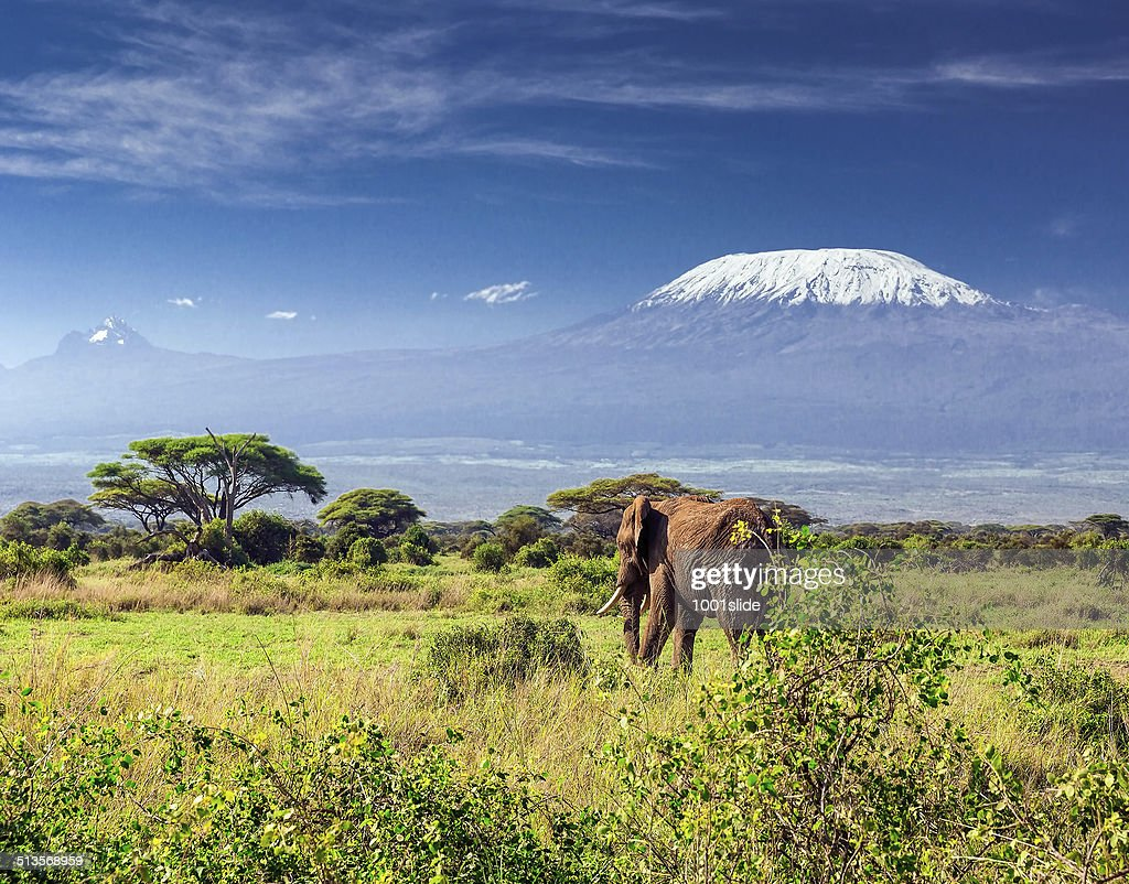 Elephant in front of Mount Kilimanjaro & Mawenzi Peak