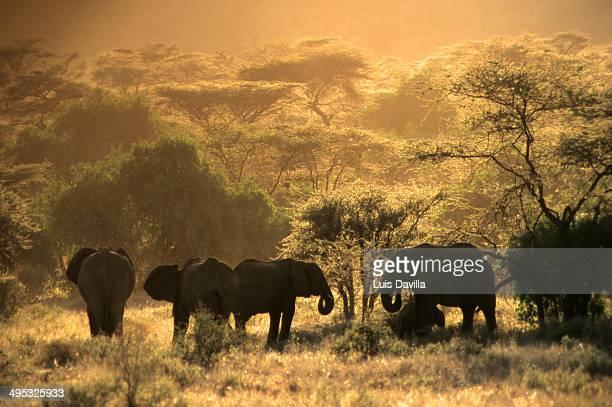 Elephant in Samburu National Park Kenya