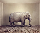 Elephant in the room metaphor for an obvious problem or risk no one wants to discuss