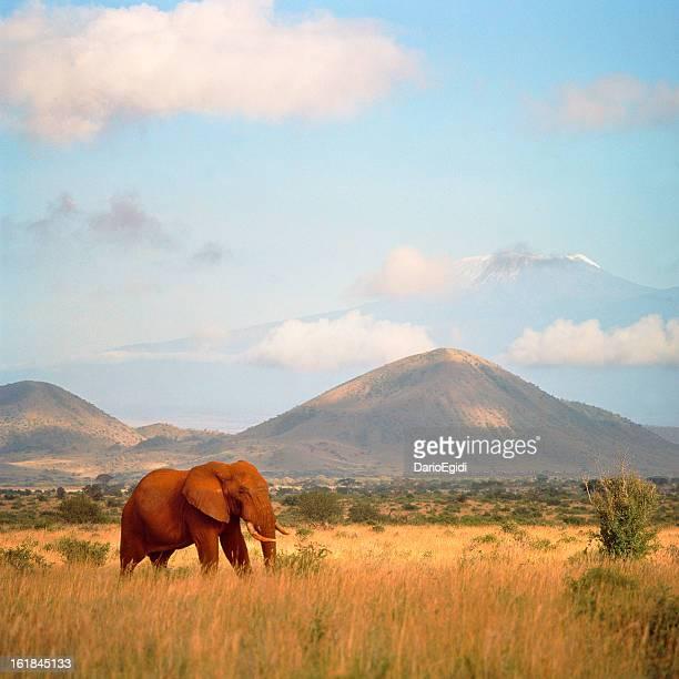 Elefante en veld con las montañas de fondo.