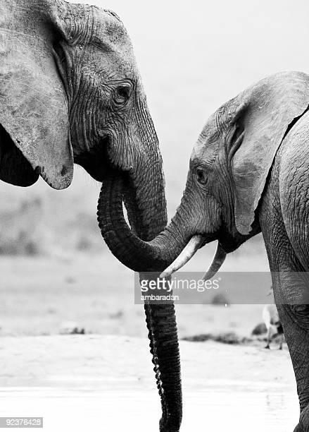 Elefanten-Mutter und Sohn
