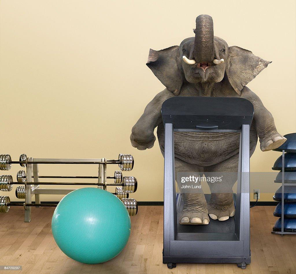 Elephant on a Treadmill : Stock Photo