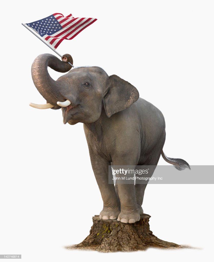 Elephant on tree stump holding American flag : Stock Photo