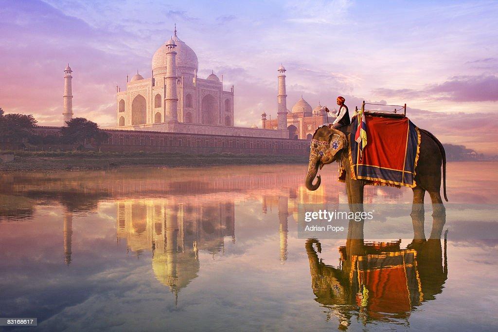 elephant & rider at Taj Mahal