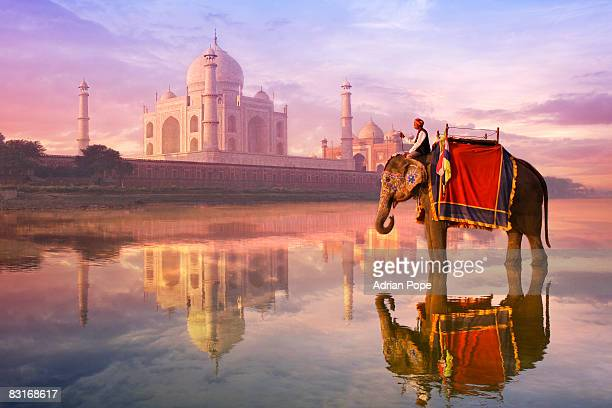elephant & rider at Taj Mahal