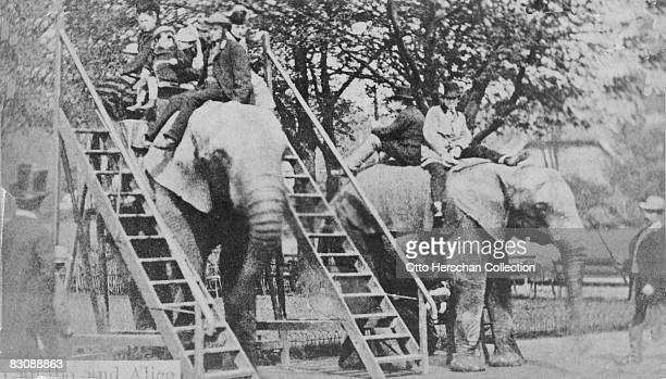 Elephant rides at London Zoo in Regent's Park 1864