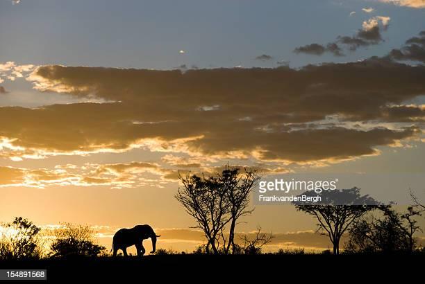 silhouette d'éléphants au coucher du soleil