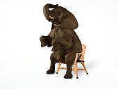 Elephant sitting on chair (Digital Composite)