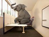 Elephant sitting on mixed race businessman's lap