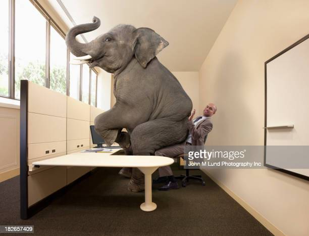 Elephant sitting on mixed race businessman's lap