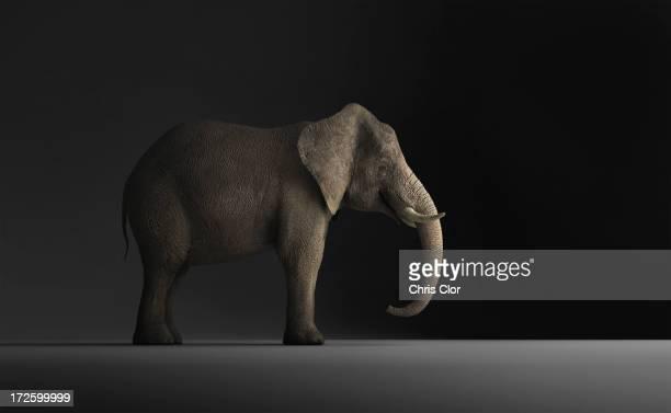 Elephant standing indoors