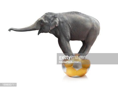 Elephant standing on a ball on a white background