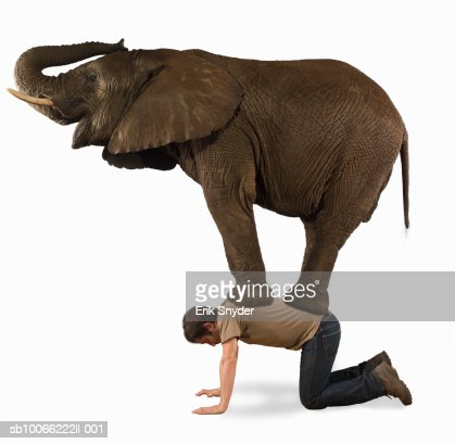 Elephant standing on man, side view (Digital Composite) : Stock Photo