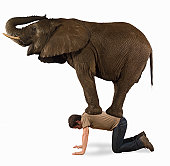 Elephant standing on man, side view (Digital Composite)