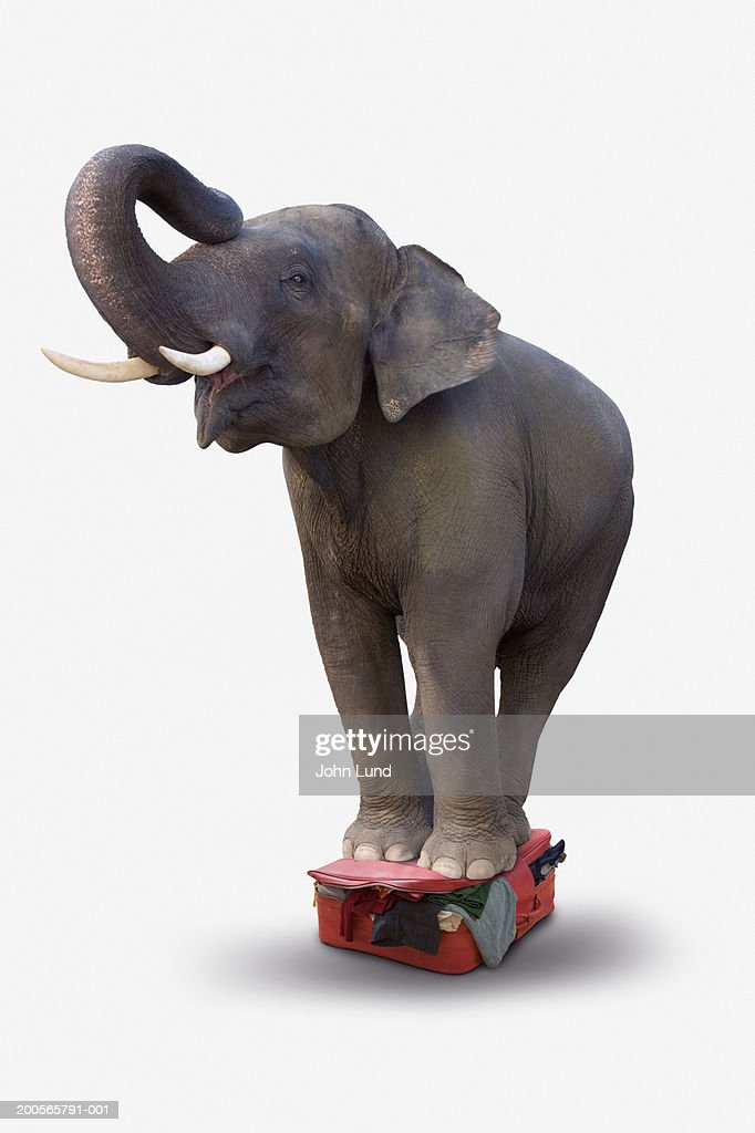Elephant standing on overstuff suitcase, close-up : Stock Photo