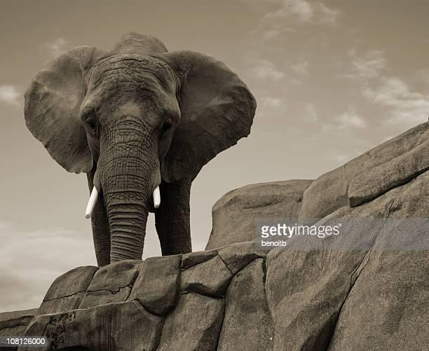 Elefante africano em pé em cima de Pedras
