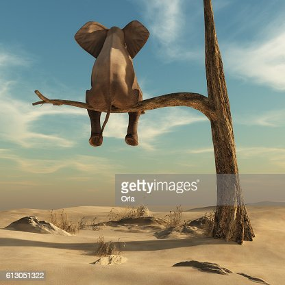 Elephant stands on thin branch of withered tree : Stock Photo