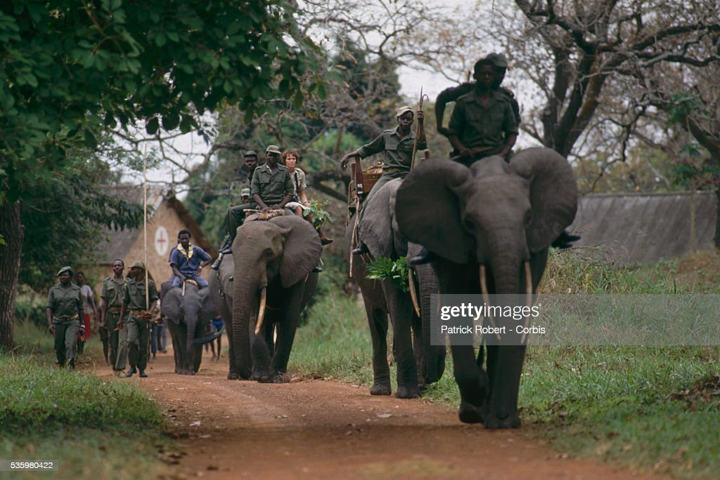 Elephant trainers ride African elephants in Virunga National Park. The animals are part of a training experiment in the park.