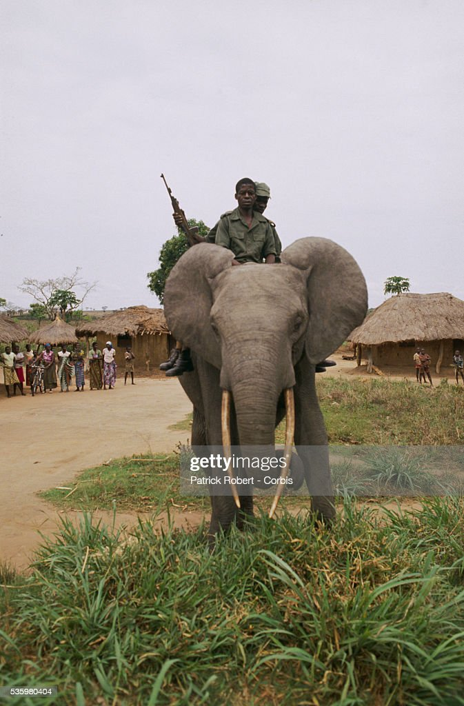 Elephant trainers ride an African elephant in Virunga National Park. This elephant and others like it are part of a training experiment in the park.