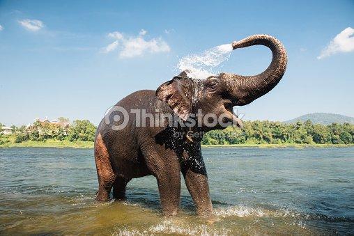 elefanten im fluss waschen stock foto thinkstock. Black Bedroom Furniture Sets. Home Design Ideas