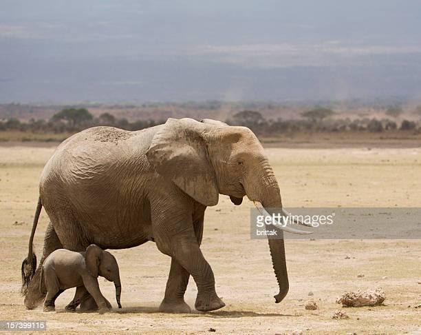 Elefante com bebê no Parque Nacional de Amboseli Quénia, África Oriental
