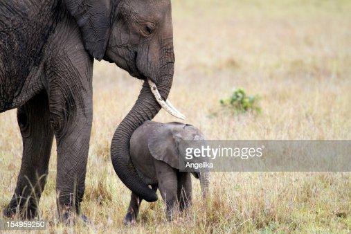 Elephant with baby, Masai Mara, Kenya