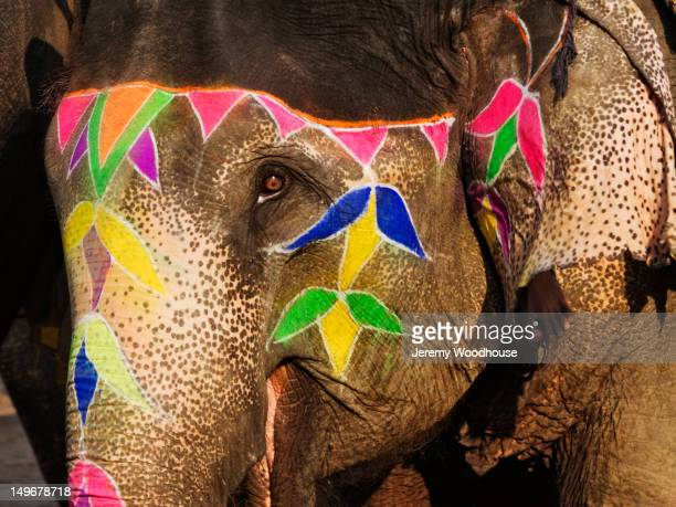 Elephant with colorfully decorated face