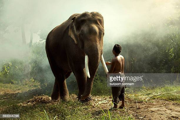 Elephant with man mahout